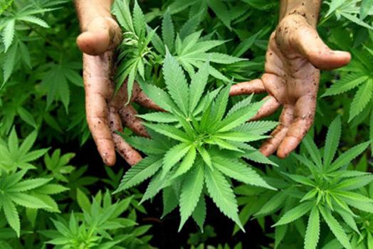 Formación sobre cannabis