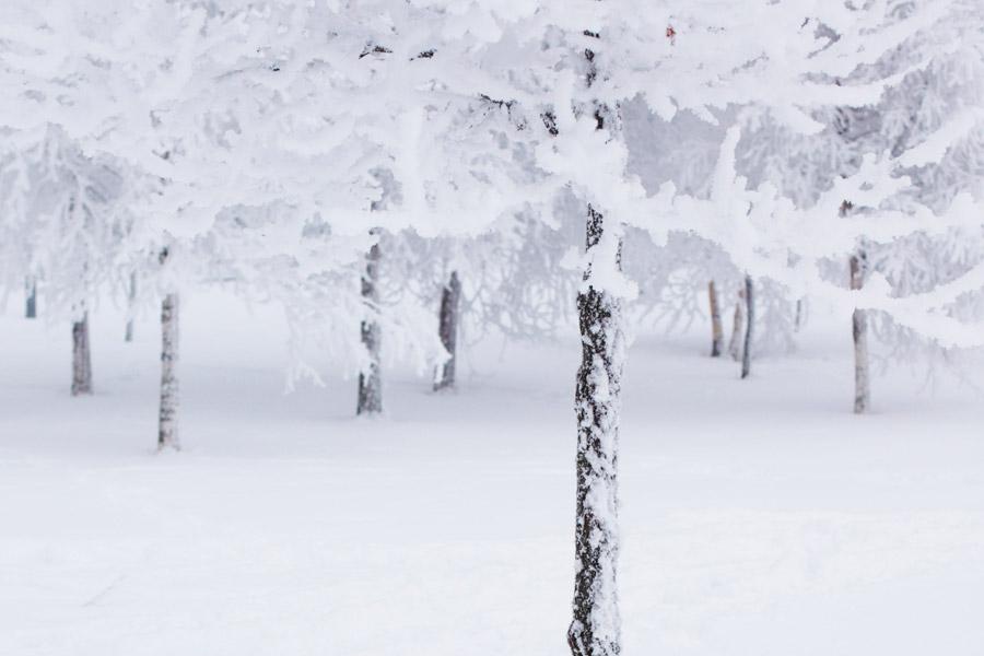 Activitats de neu al Berguedà